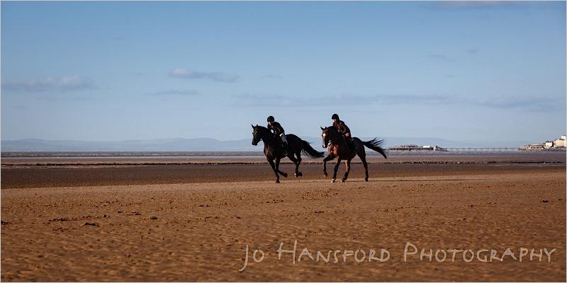 Jo Hansford Photography - Equine