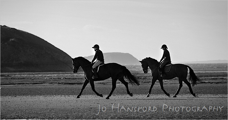 Jo Hansford Photography - Equine Photography