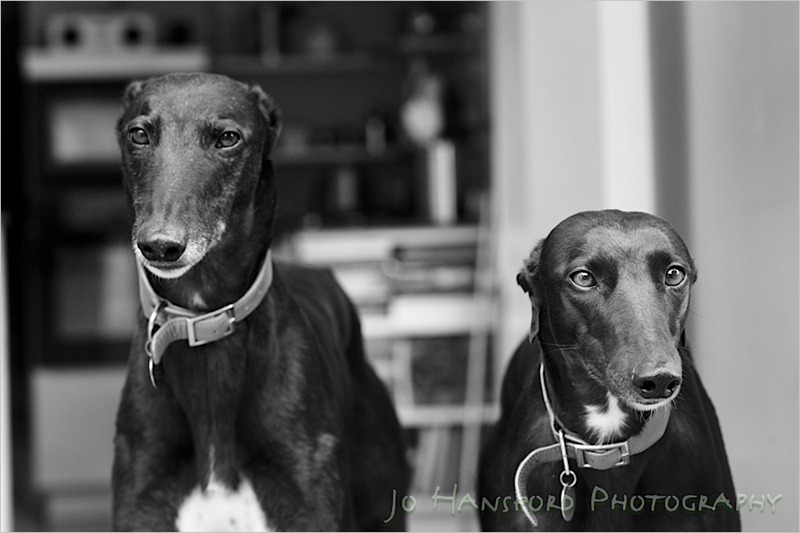 Jo Hansford Photography - Pet Photography
