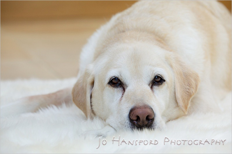 Jo Hansford Photography - Lifestyle Photography