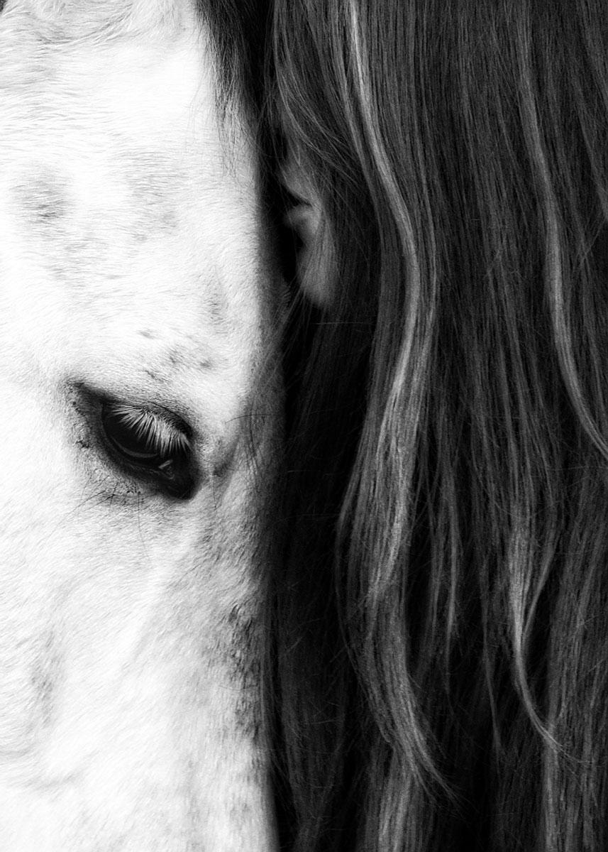 johansfordphotography_equine_016