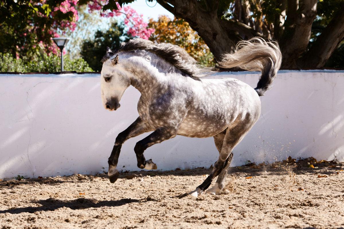 johansfordphotography_equine_035