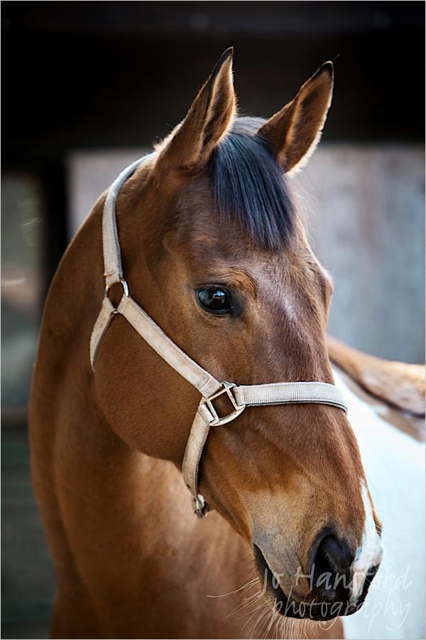 johansfordphotography_equine_01