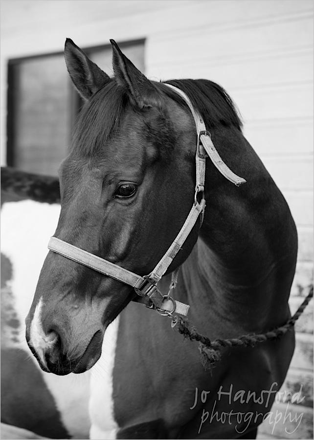 johansfordphotography_equine_02