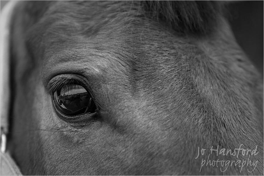 johansfordphotography_equine_03