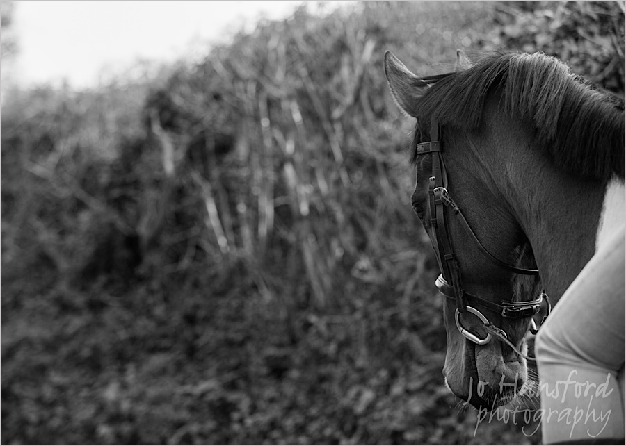 johansfordphotography_equine_15