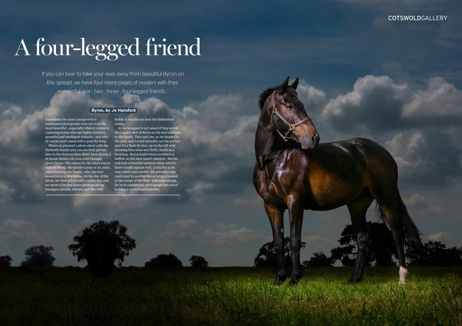 Jo Hansford - Equine photography