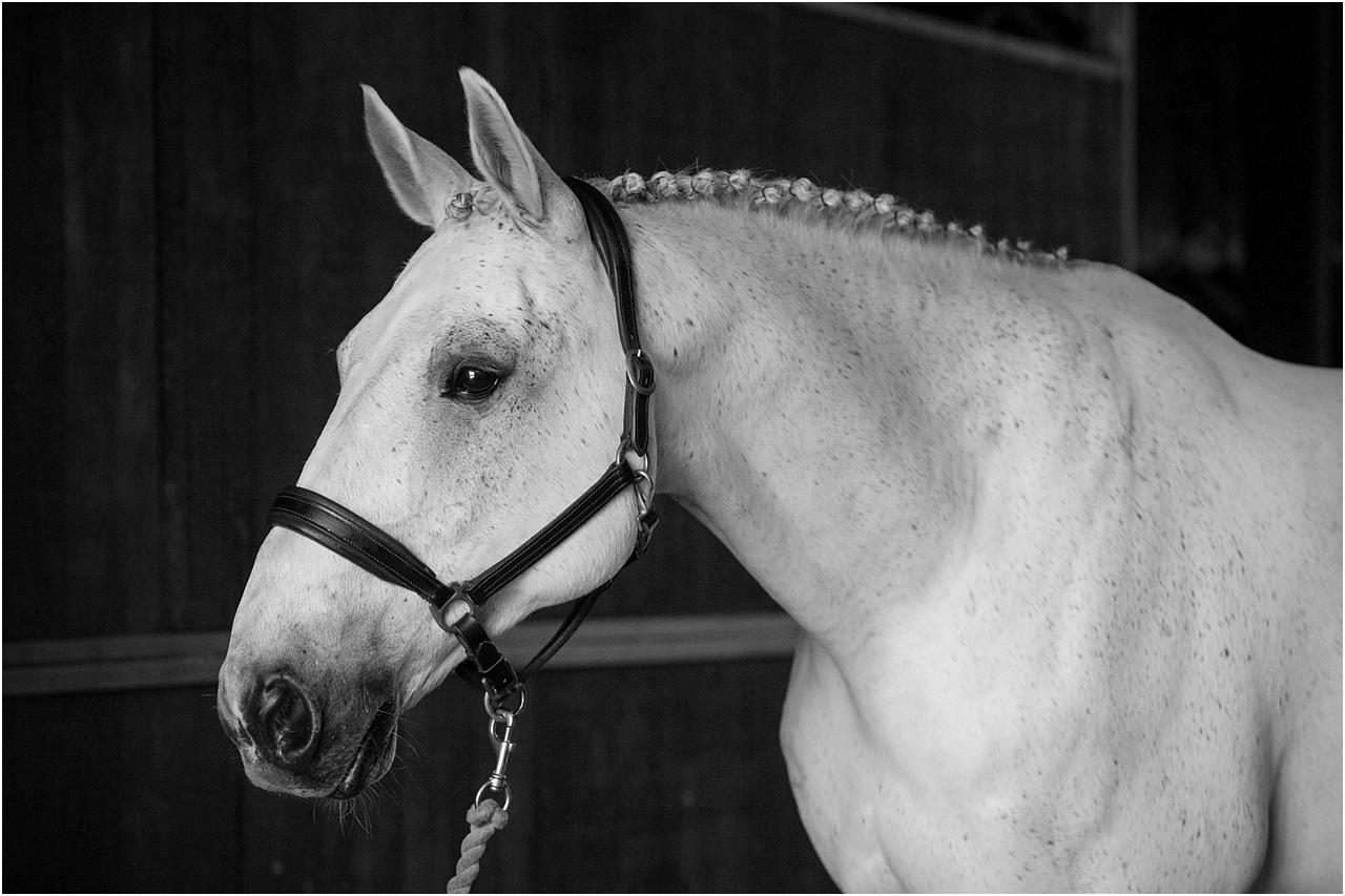 Horse_photography_Bath_Jo_Hansford_002