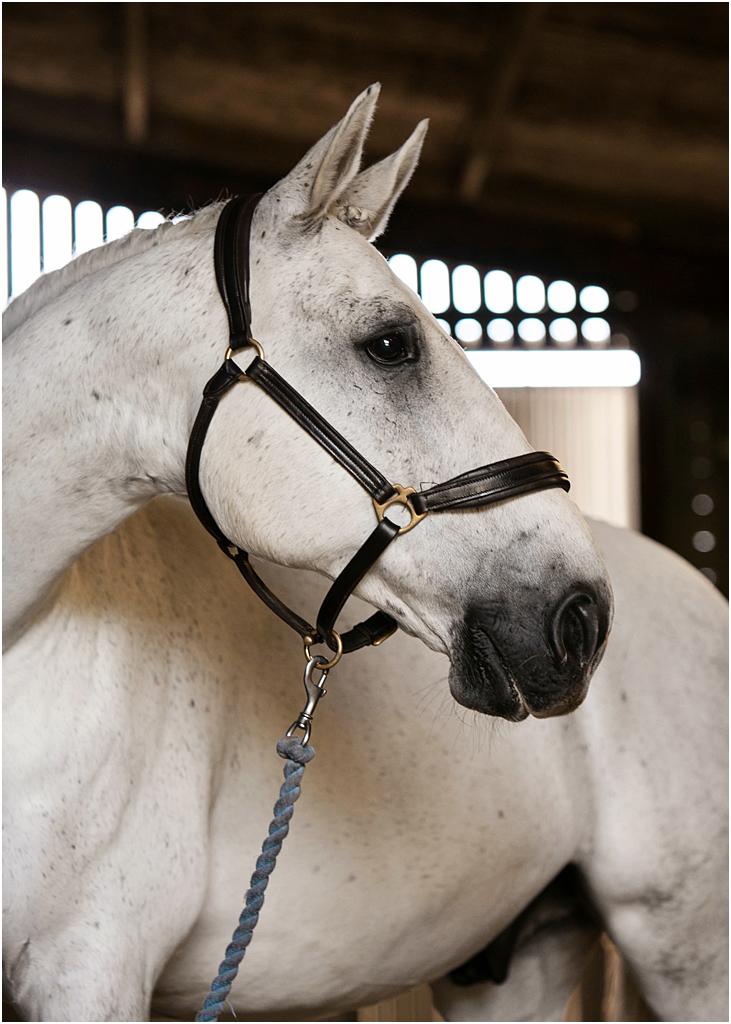 Horse_photography_Bath_Jo_Hansford_008