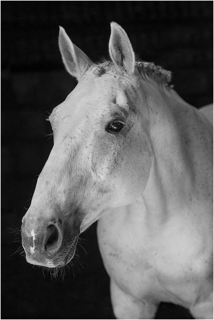 Horse_photography_Bath_Jo_Hansford_010