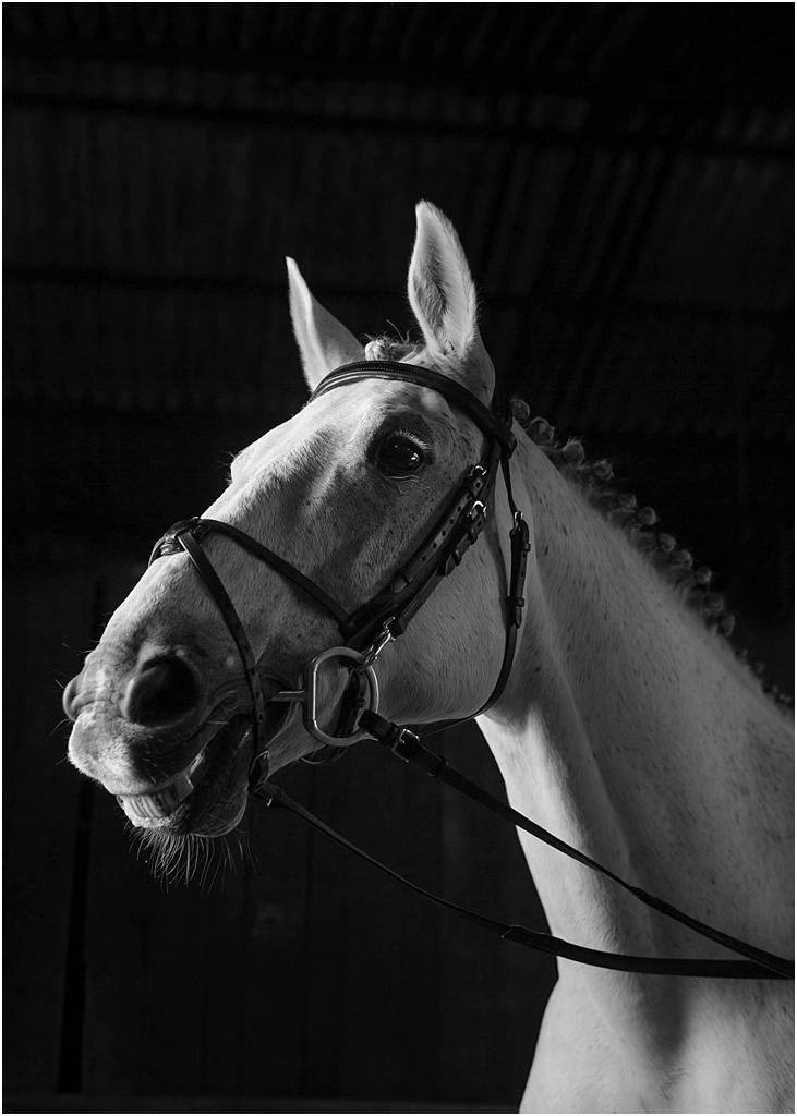 Horse_photography_Bath_Jo_Hansford_014