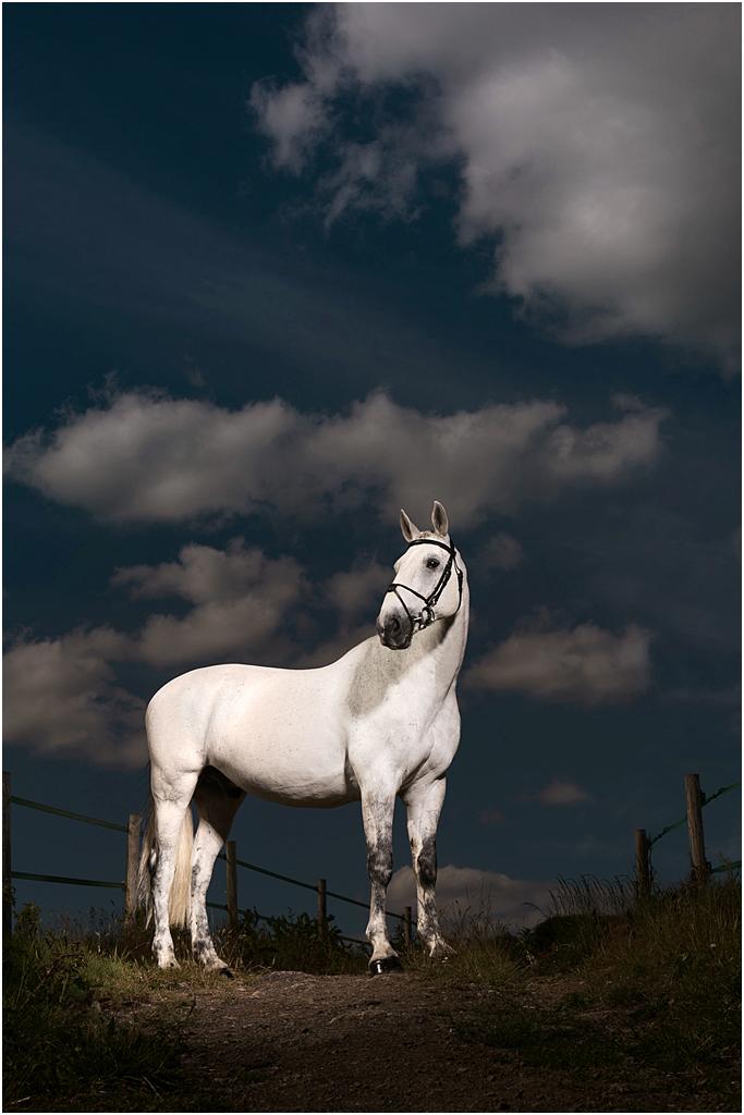 Horse_photography_Bath_Jo_Hansford_021