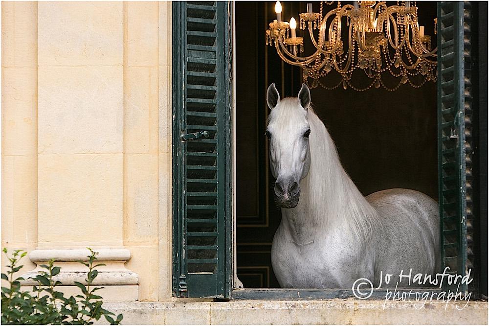 Horse photographer Real Escuela Andaluza del Arte Ecuestra