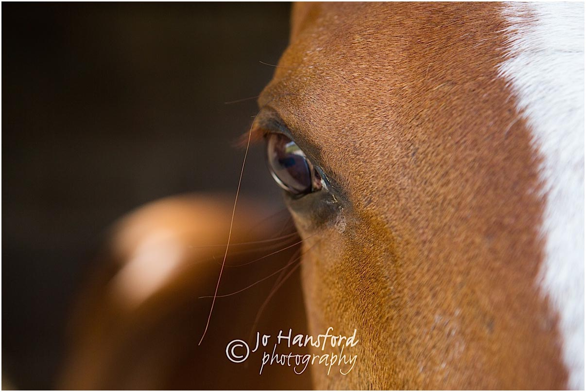 Horse photography Gloucestershire