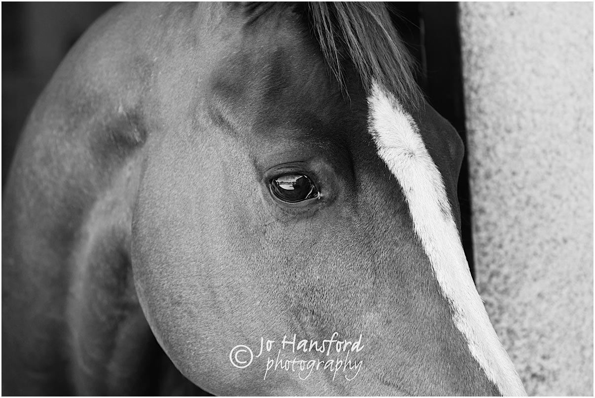 Horse_photography_Gloucestershire_Jo_Hansford_002