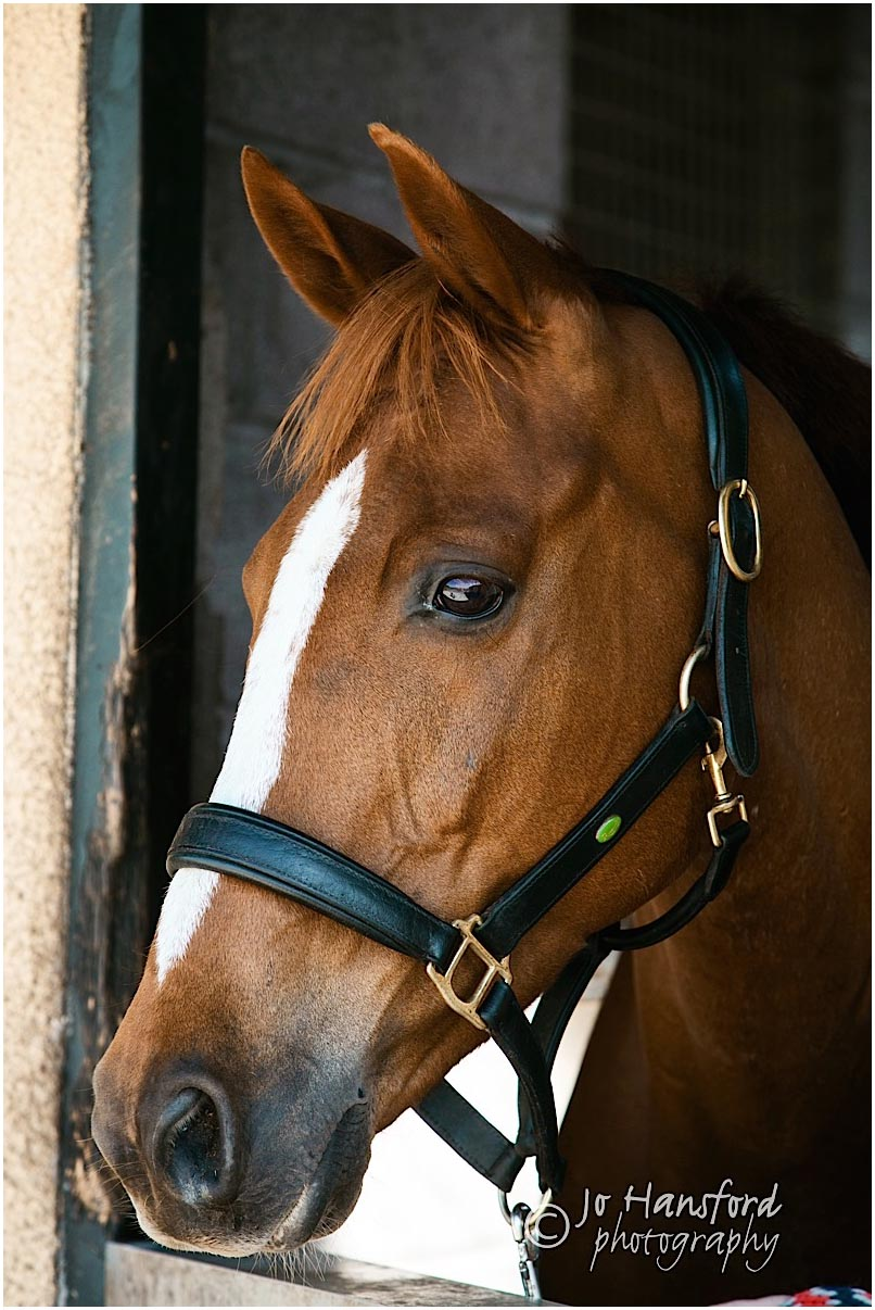 Horse_photography_Gloucestershire_Jo_Hansford_003
