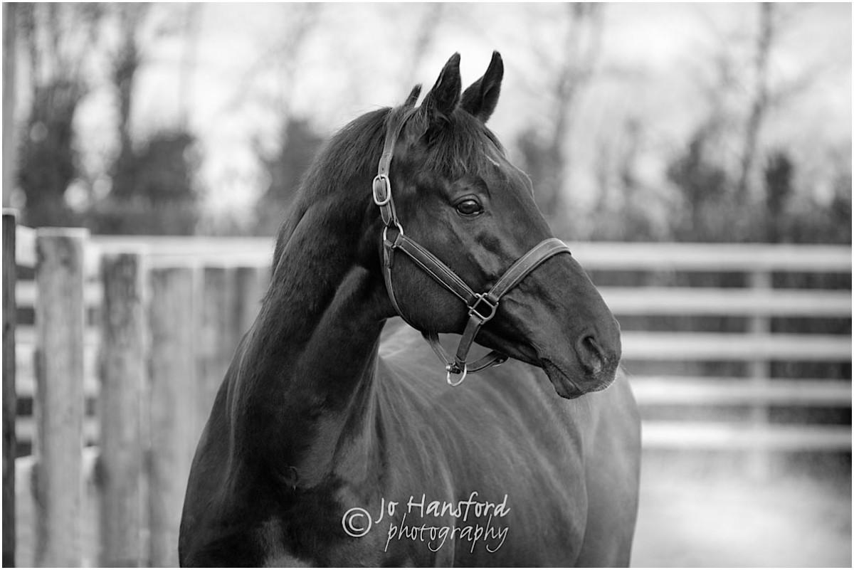 Somerset_horse_photographer_Jo_Hansford_001
