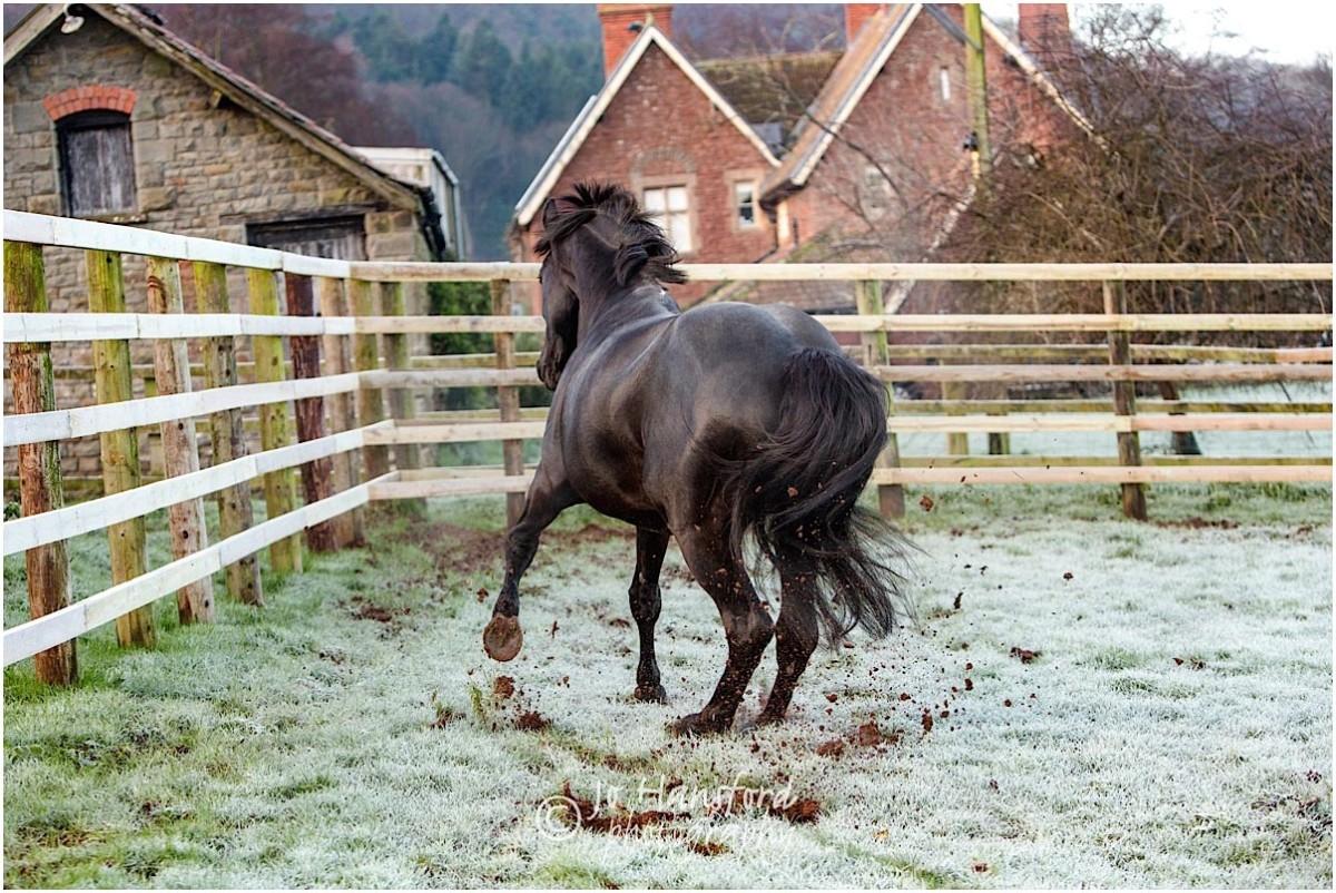 Somerset_horse_photographer_Jo_Hansford_009