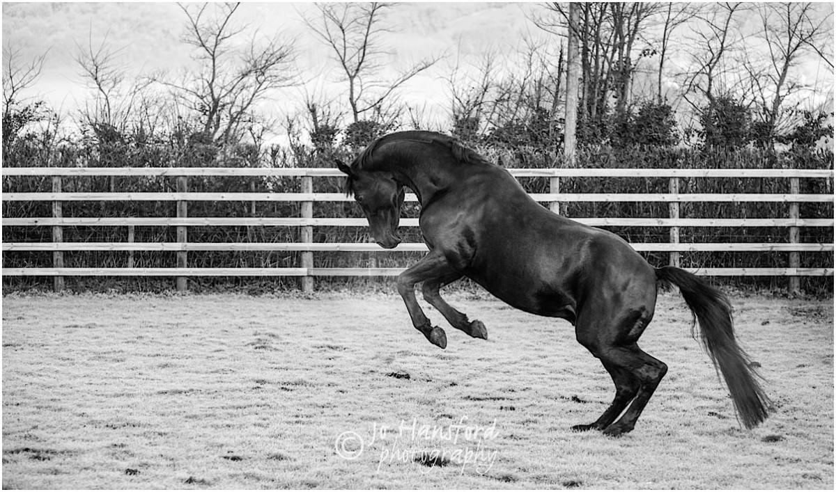 Somerset_horse_photographer_Jo_Hansford_010