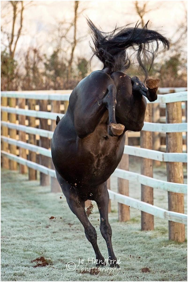 Somerset_horse_photographer_Jo_Hansford_011
