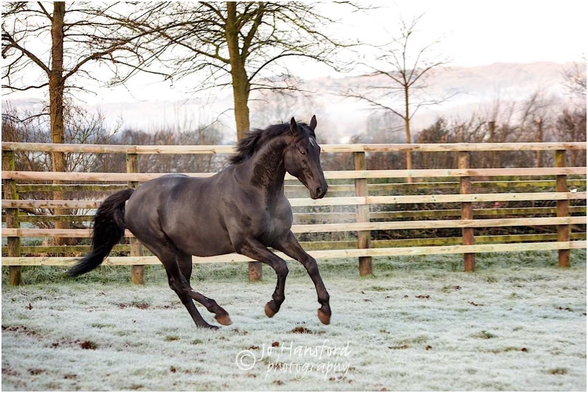 Somerset_horse_photographer_Jo_Hansford_014