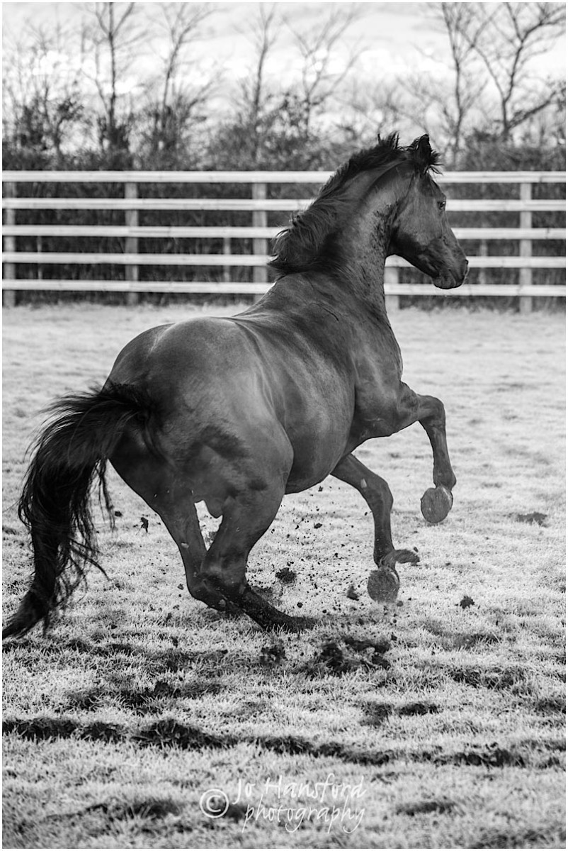 Somerset_horse_photographer_Jo_Hansford_015