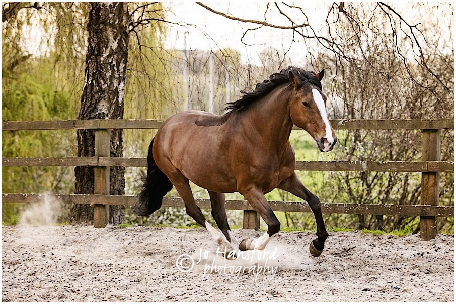 Horse_photographer_Jo_Hansford_003