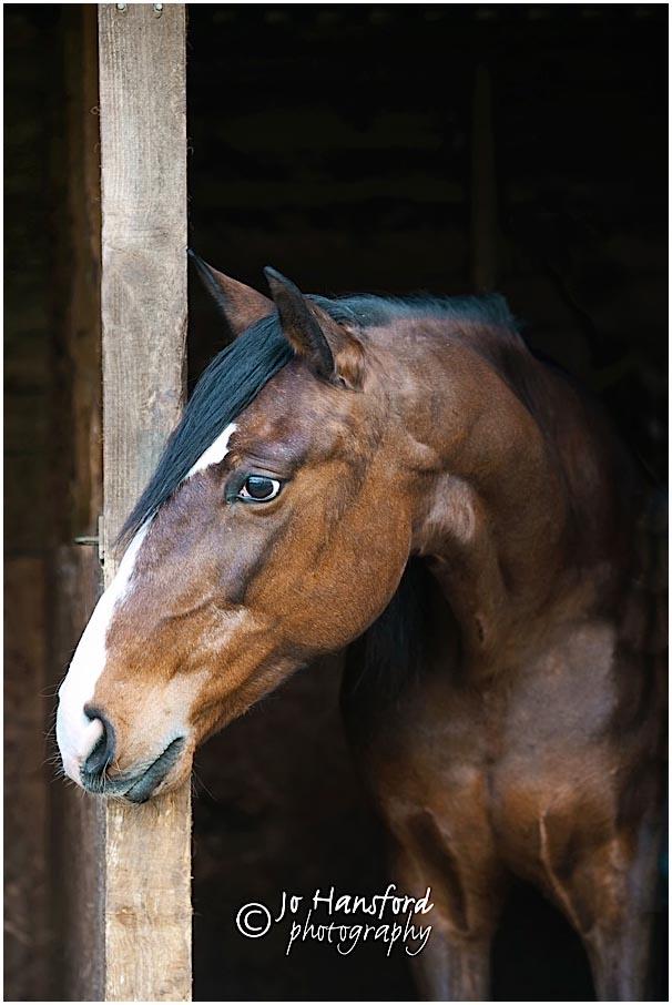 Horse_photographer_Jo_Hansford_009