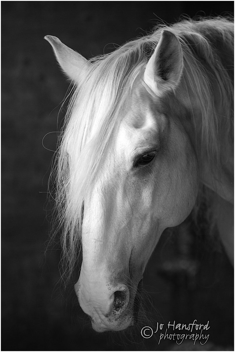 Horse_photographer_Jo_Hansford_012
