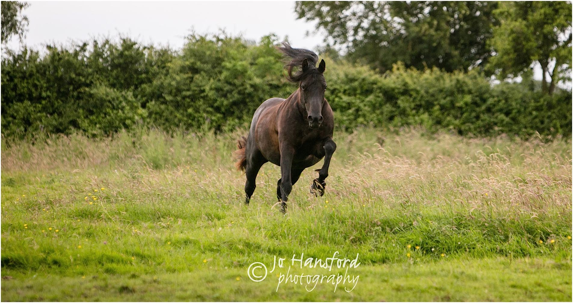 Gloucestershire Horse photography