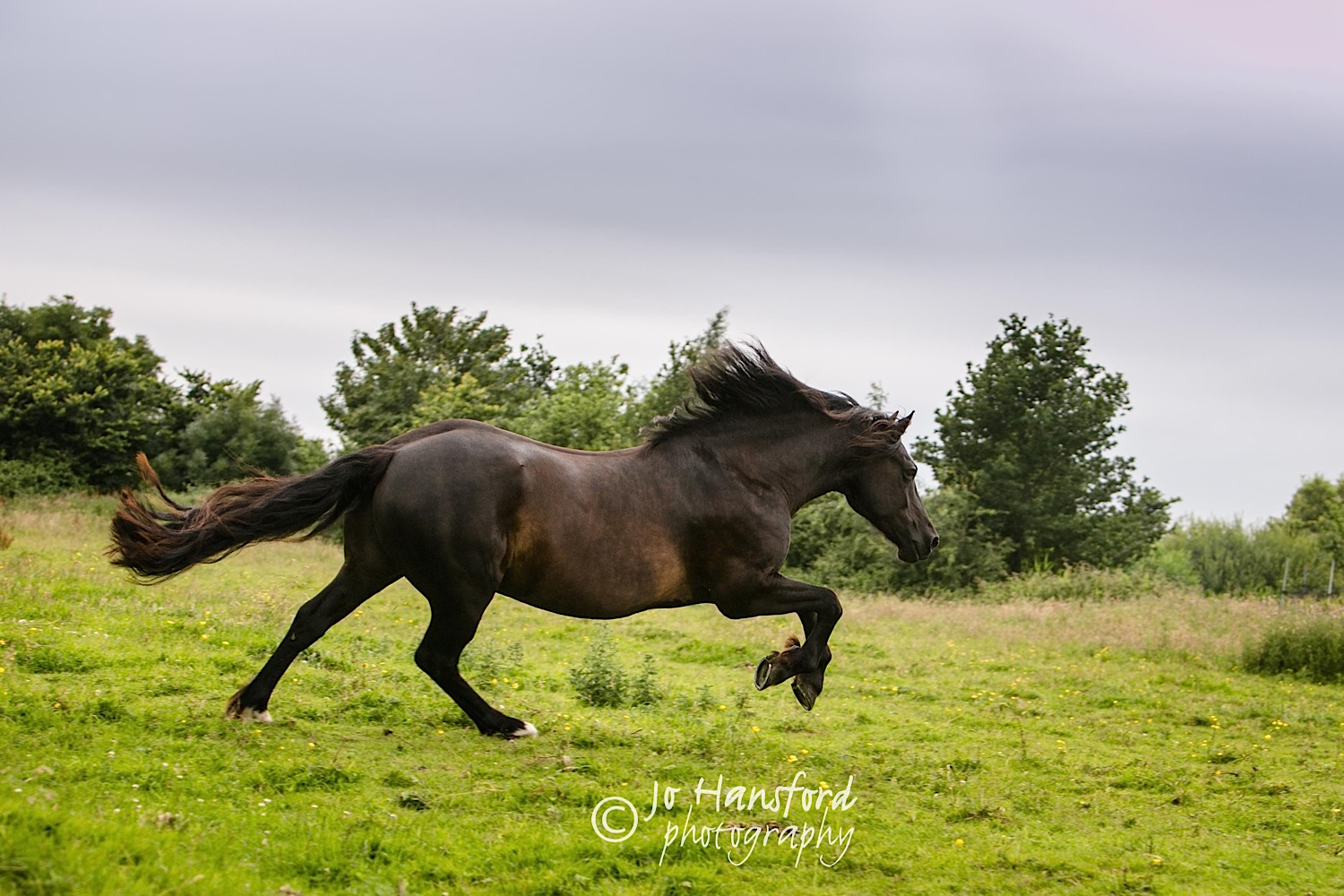 Horse_photography_Gloucestershire_Jo_Hansford_004