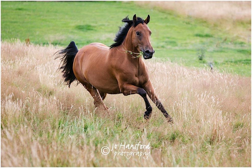 Horse_photographer_Somerset_Jo_Hansford_006