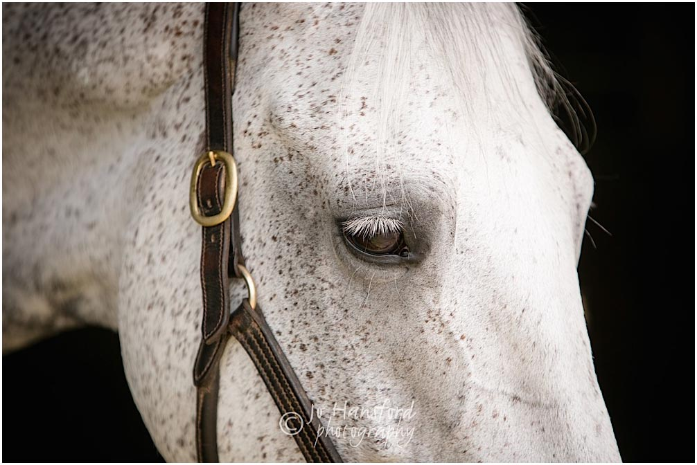 Horse_photographer_Somerset_Jo_Hansford_057