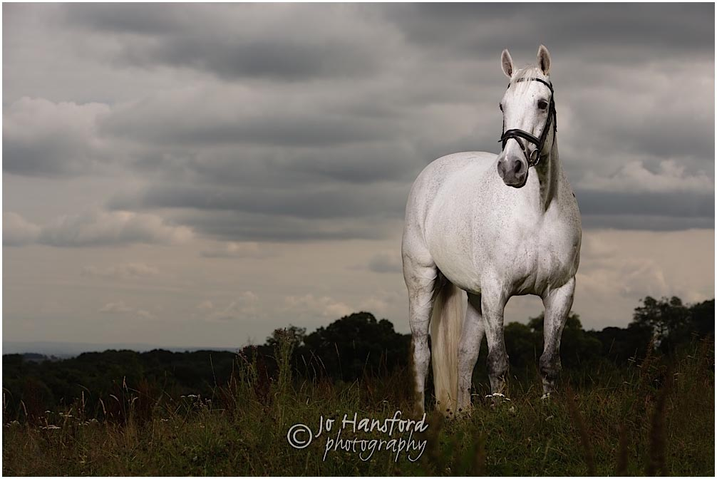 Horse_photographer_Somerset_Jo_Hansford_060