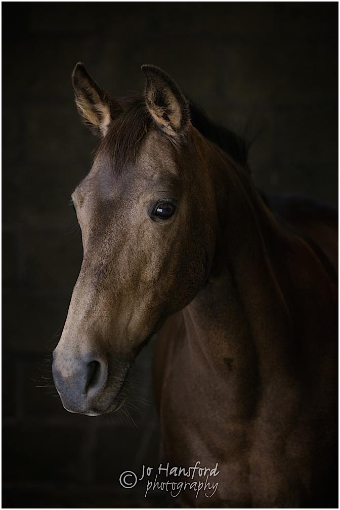 Cotswold_Horse_photographer_Jo _Hansford_024