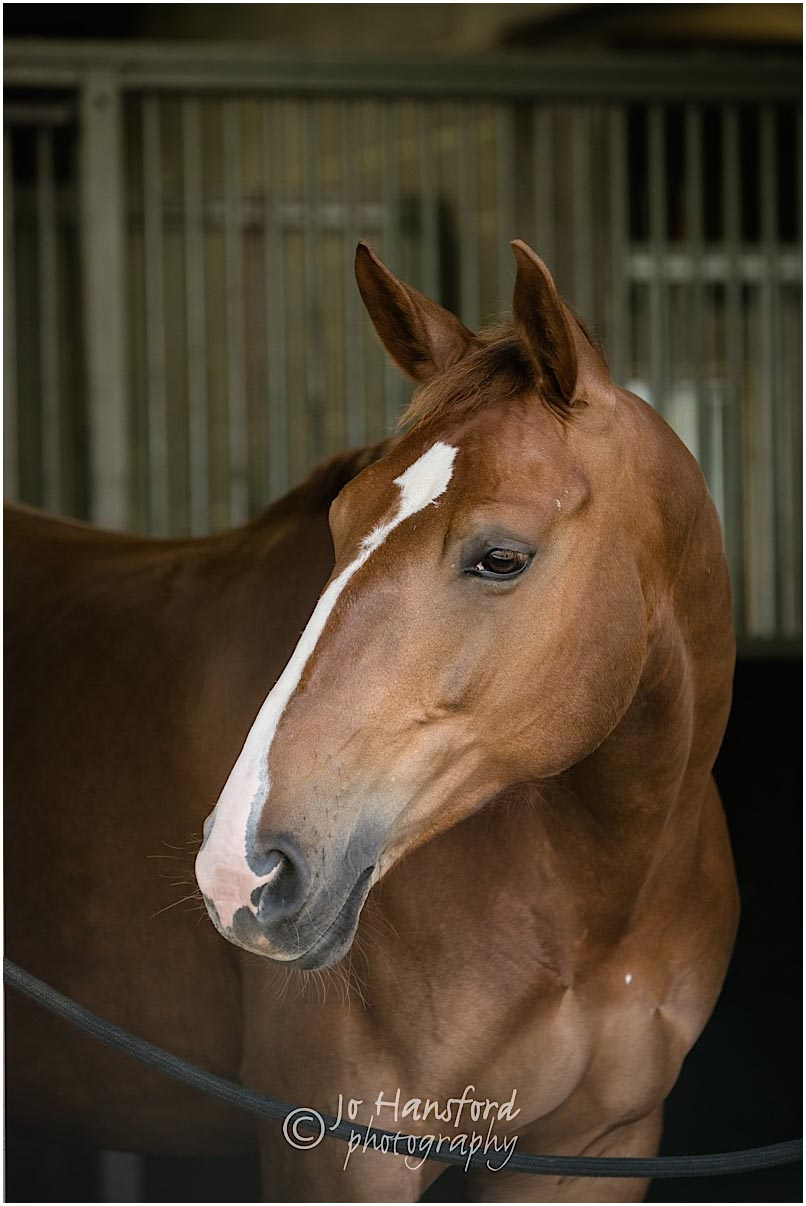 Equine_photographer_Somerset_Jo_Hansford_008