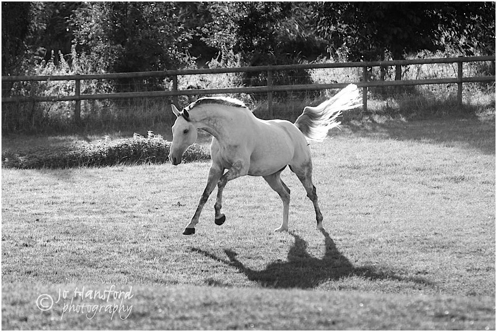 Horse_photography_Gloucestershire_Jo_Hansford_012