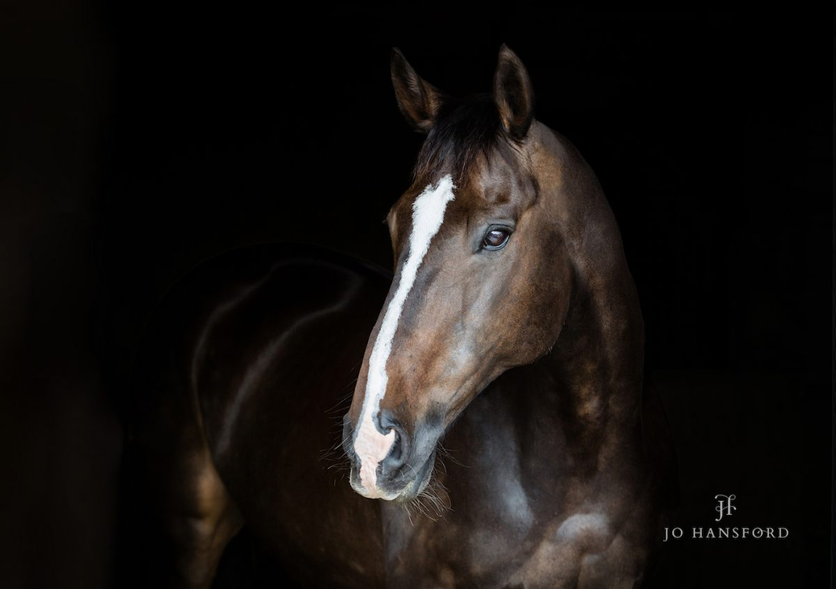 How To Prepare For An Equine Photoshoot Wedding Family And Horse Photography By Jo Hansford
