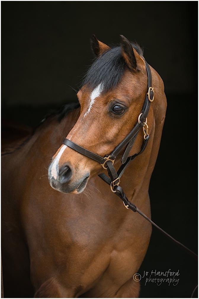 Gloucestershire horse photography Jo Hansford