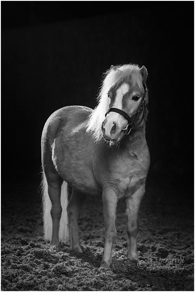 Cotswolds horse photographer Jo Hansford
