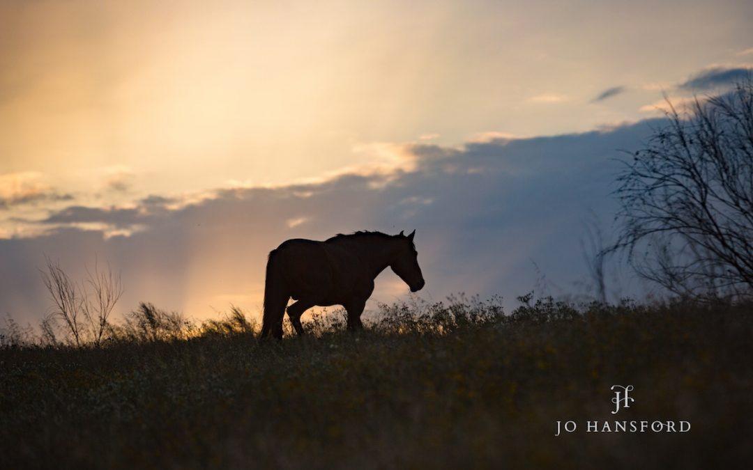 Horse photography Portugal – beautiful Zambujal