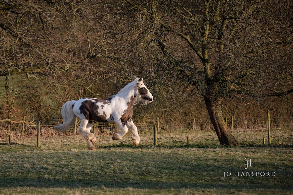 Horse photography Somerset Jo Hansford