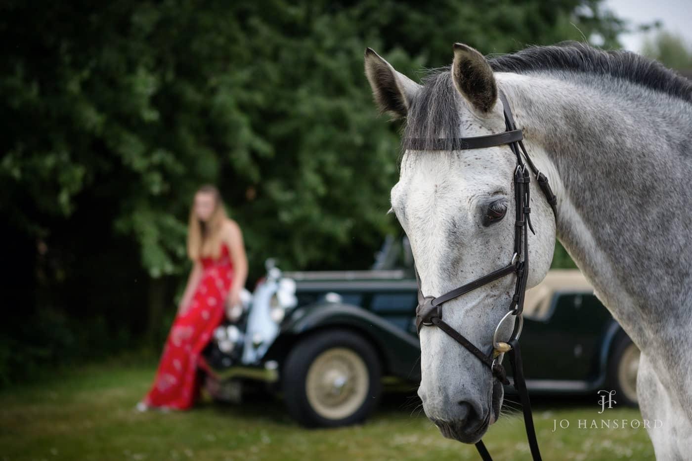 Horse phoographer Cotswolds Jo Hansford