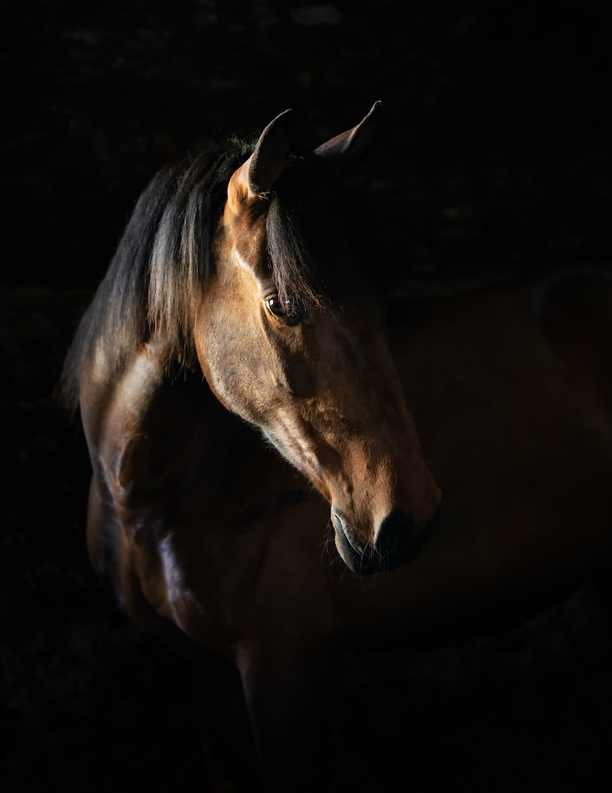 Horse photography Berkshire Jo Hansford