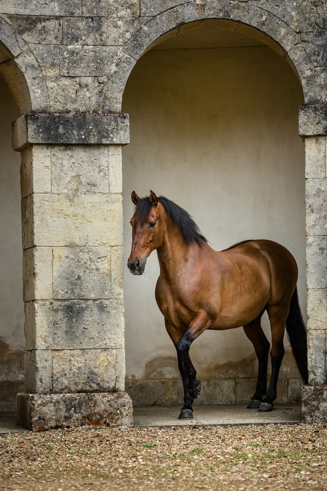 Horse photographer Buckinghamshire Jo Hansford