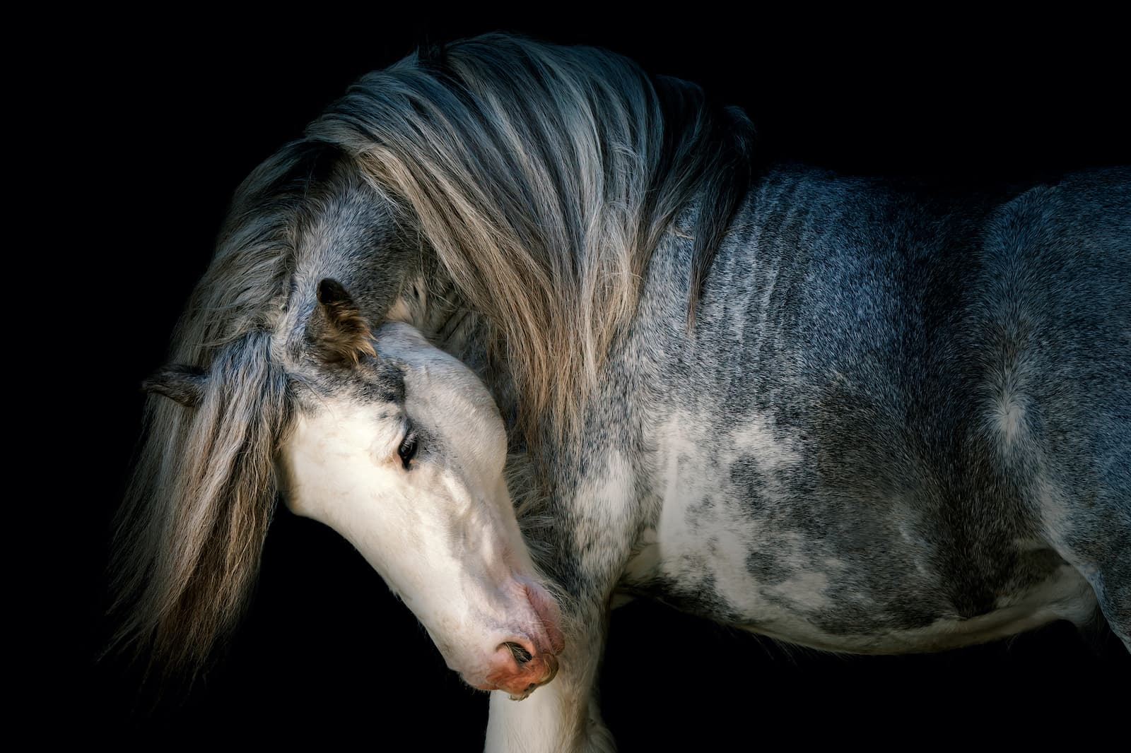 Horse photographer Somerset Jo Hansford