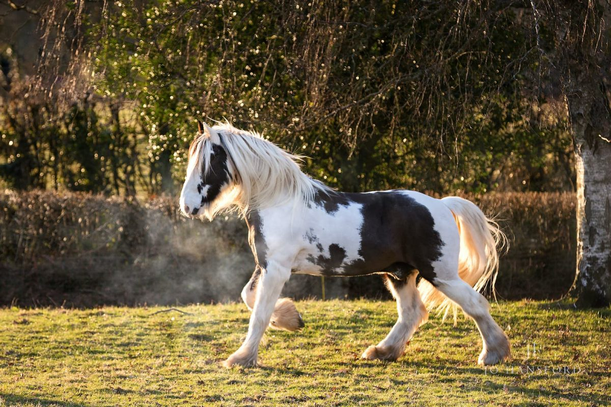 winter horse photography