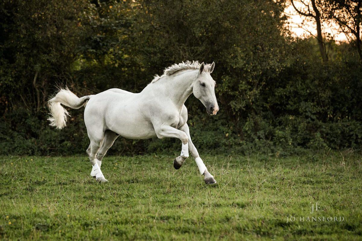 Equine photoshoots Jo Hansford