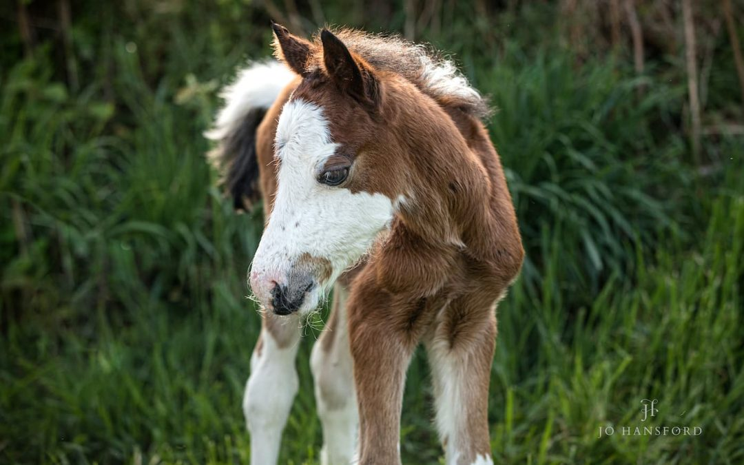 Orphan foal 'Cal' arrives – a rescue story with a happy ending