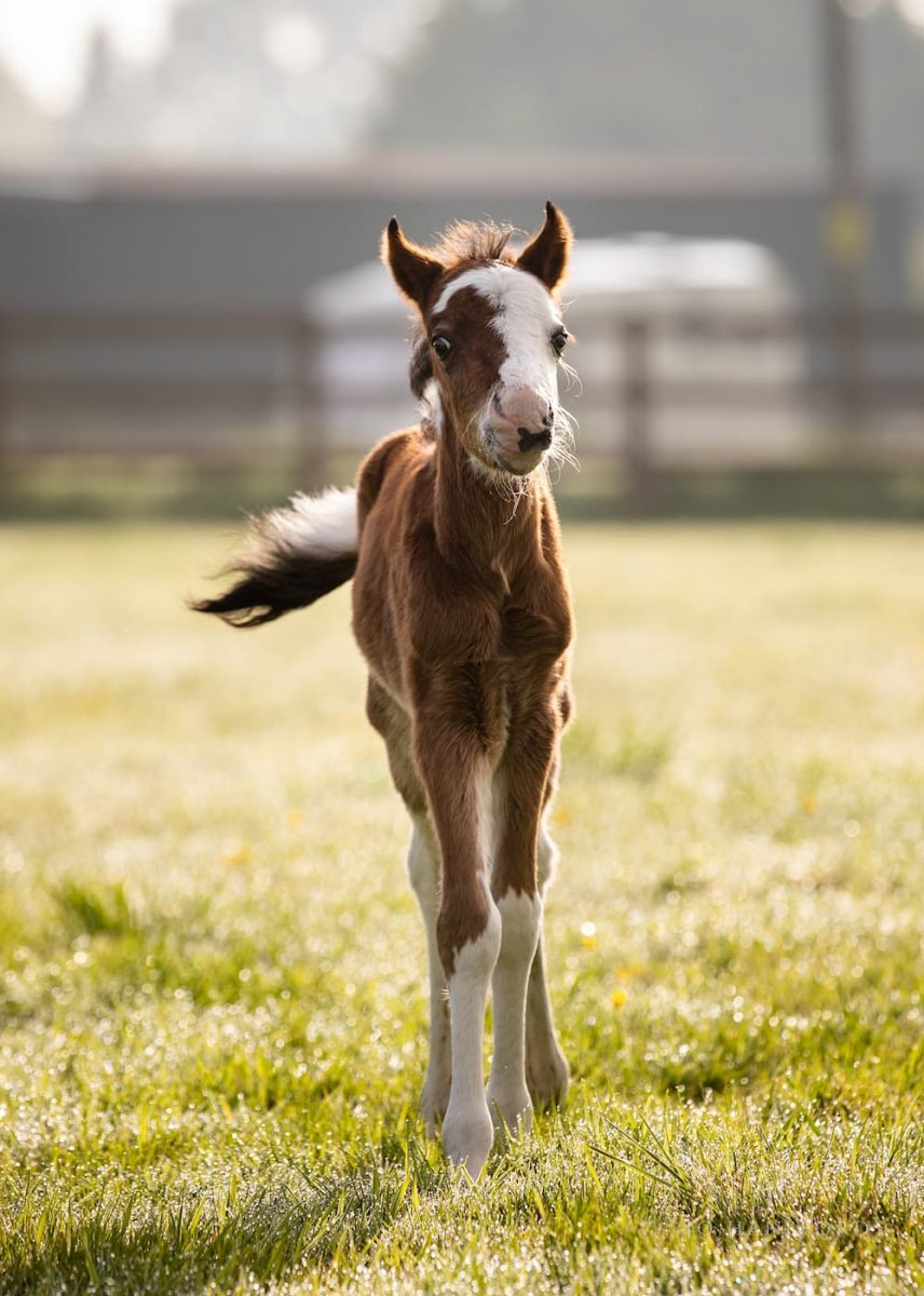 Horse photographer Somerset Jo Hansford